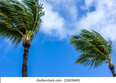 Palm Trees Sway in Tropical Breeze