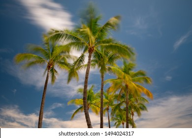 Palm trees swaying in the wind. Long exposure shot to show motion blur