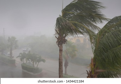 Palm trees swaying in the wind from a tropical storm