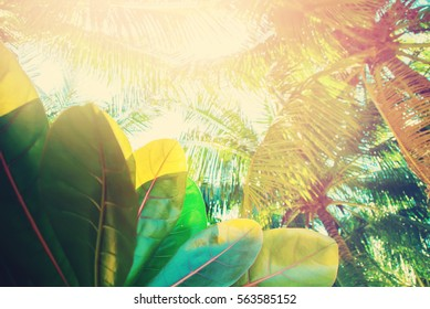 Palm Trees Thailand Tropical Landscape Holiday Travel Background Heat Effect Journey Toned