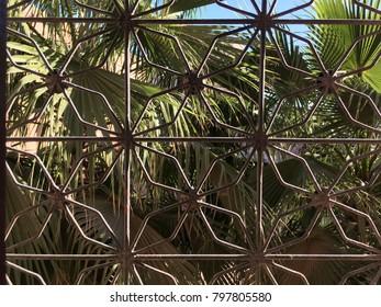Palm trees through grate