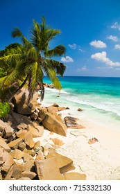 Palm trees of tropical beach Anse Patates on La Digue Island, Seychelles