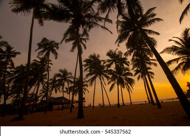 Palm trees at tropical beach at Sunset, Goa, India