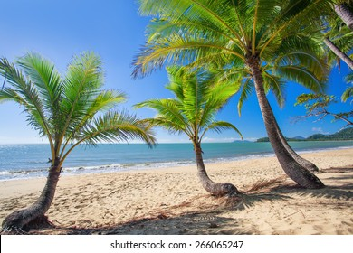 Palm trees at tropical Palm Cove beach in north Queensland, Australia