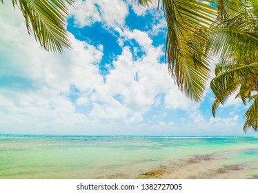 Palm trees and turquoise sea in Guadeloupe, French west indies. Lesser Antilles, Caribbean sea