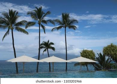 Palm Trees and Umbrellas
