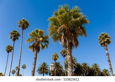 The palm trees under the blue sky