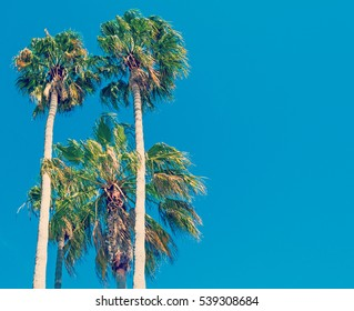 palm trees under clear sky in California, USA