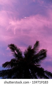 Palm Trees under the moonlight