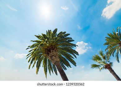 Palm trees under a shining sun in Los Angeles. Southern California, USA