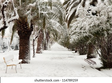 Palm trees under snow in unusually cold weather