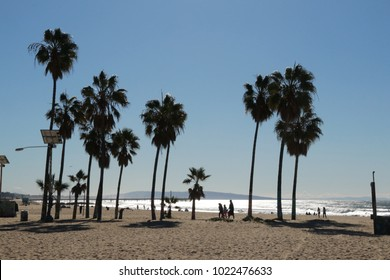 Palm trees at Venice Beach in Los Angeles, USA.