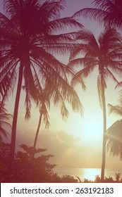 palm trees, vintage film style