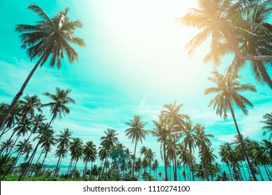 Palm trees vintage toned , Fashion, travel, summer, vacation and tropical beach . Creative made of green tree leaves. coconut palm trees .