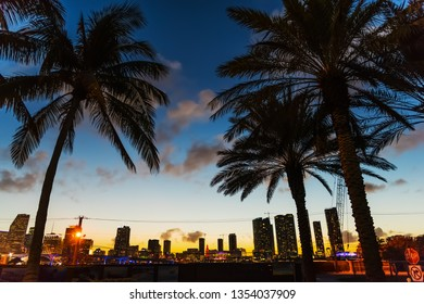 Palm trees in Watson island, Miami. Southern Florida, USA