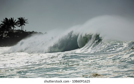 Palm trees and wave - North Shore , Oahu, Hawaii