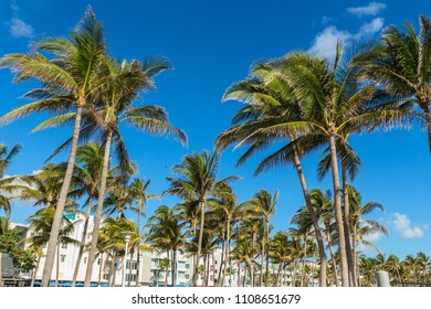 Palm trees wave with the wind in front of Ocean drive in South Beach, Florida.