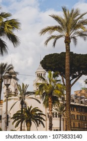 palm trees and white building in Rome, Italy