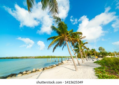 Palm trees and white sand in Florida Keys. Southern Florida, USA