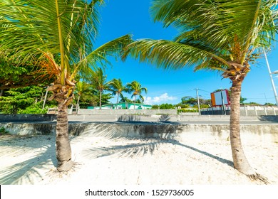 Palm trees and white sand in Raisins Clairs beach in Guadeloupe, French west indies. Lesser Antilles, Caribbean sea