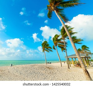 Palm trees and white sand in Sombrero Beach in Florida Keys, USA