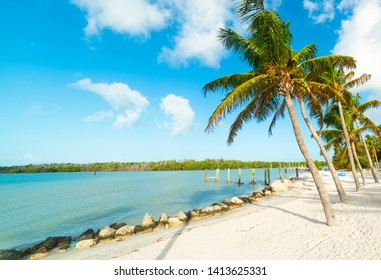 Palm trees, white sand and turquoise water in Florida Keys. Southern Florida, USA