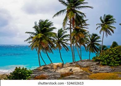 Palm trees at wild beach Bay Barbados