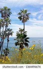 Palm trees and yellow flowers grow near a blue ocean