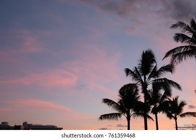 Palm Tress Against the Sunset