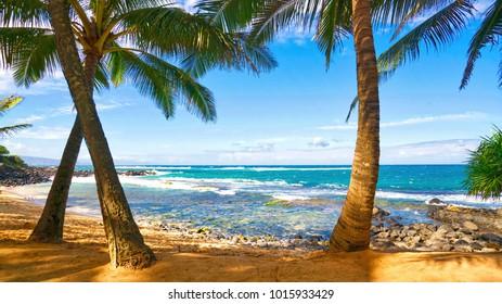 Palm Tress in the Hawaiian Breeze