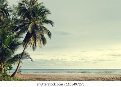 Palm and tropical beach