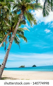 Palm and tropical beach.