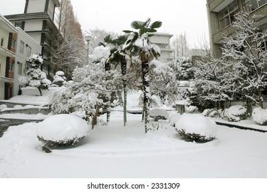 Palm under snow