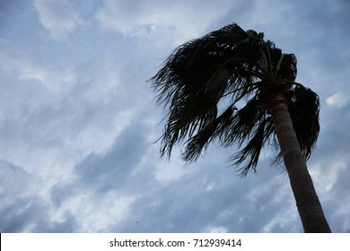Palm in the wind