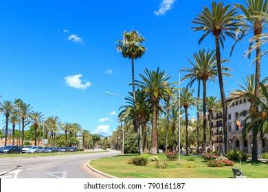 Palma de Mallorca famous marina Carrer Del Moll, and palm trees promenade.
