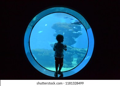 Palma de Mallorca, Mallorca/Majorca Spain - June 4 2016: The silhouette of a small child looking  through the glass at the various species of fish in the aquarium
