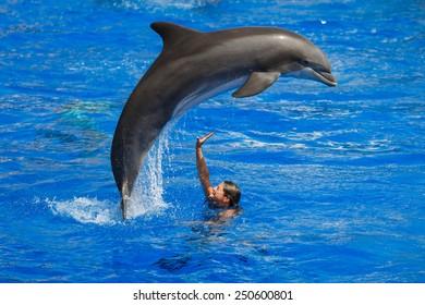Palma de Mallorca, Spain, July 18 2014: Dolphins show in Dolphinarium of the Palma de Mallorca