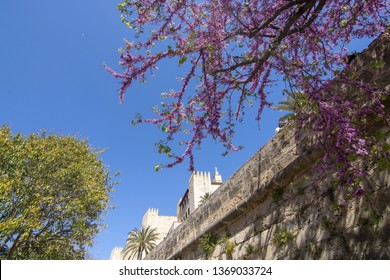 PALMA, MALLORCA, SPAIN - APRIL 9, 2019: Pink spring blossoms in front of Almudaina castle on a sunny day on April 9, 2019 in Palma, Mallorca, Spain.