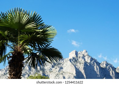 Palma on the background of the rocky mountains. View of the Ai-Petri Mountains. Republic of Crimea. Russian Federation.
