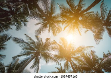 Palm,coconut Trees Vintage - clear summer skies