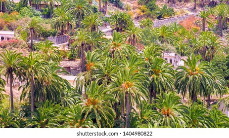 """a palm-dotted settlement in the """"Valle Hermosa"""" on the Canary Island of La Gomera. Far scattered little typical houses are in a large palm grove, top view from the top without sky, without people."""