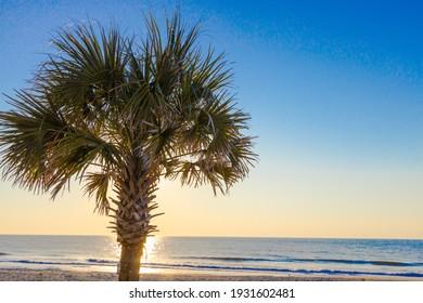 Palmetto tree at sunrise on the Atlantic Ocean coast in Myrtle Beach, South Carolina.