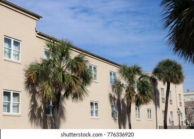 Palmetto Trees in Charleston