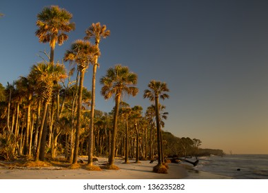 Palmetto trees at sunrise in Hunting Island State Park