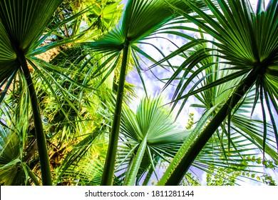 Palmleaves blue sky palmtrees jungle