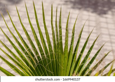 Palmleaves 					 with a tile floor in the back