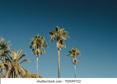 Palms against vibrant blue sky on Spain Barcelona - Music Album cover, presentation or any other use cover