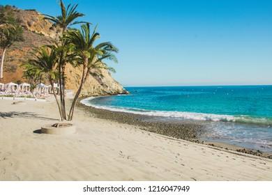 Palms and beach, blue ocean. Catalina Island, Descanso beach, Avalon, California.