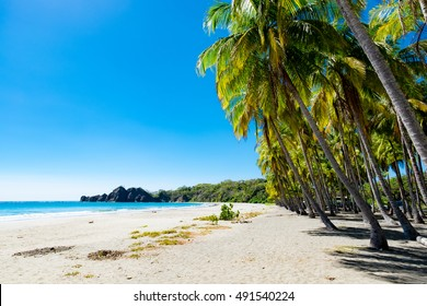 Palms at the beach in Puerto Carrillo, Costa Rica in opposite light. Puerto Carrillo is a small village at the Pacific Coast on the Peninsula Nicoya.