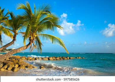 Palms bent on the shore of the ocean. Worthing Beach. Located on the south coast of Barbados.